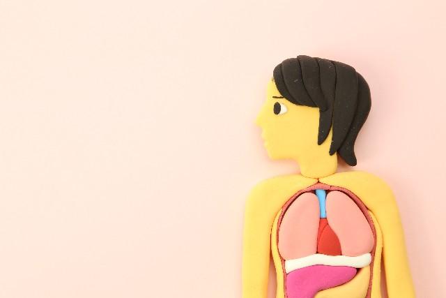 ミネラルウォーターと腎臓